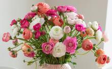 Blomster som gir følelsen av vår