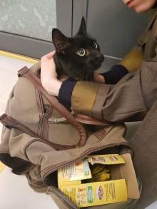 Katt dumpad på vårt kontor visar på behovet av en ny djurskyddslag