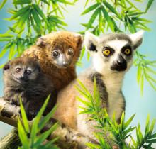 Årets nyheter i Parken Zoo avslöjas