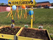 Pressinbjudan: Ny humlegård på förskola positiv effekt av corona