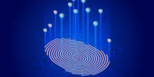 The Sprinkle Evolution: Fluent Digital Presence