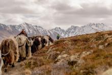 Vom Mikroorganismus bis zum Yak – Tierische Erlebnisse in der Schweiz