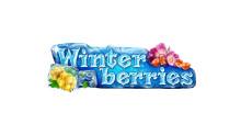Slot game winterberries