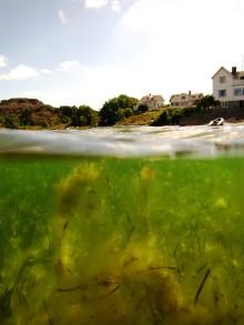 Hög biologisk mångfald ger friska sjögräsängar