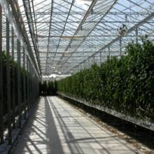 Industrins överskottsvärme används för matproduktion