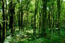 Utbildningsprogram om biodiversitet riktat åt företag startar för tredje gången i år