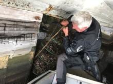 Blåskjel i bur som miljødetektivar