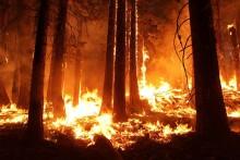 Växthuseffekt gav oss brandskyddade träd