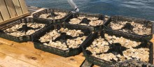 Ostrea fullbordar världens första vertikalt integrerade odling av det platta ostronet på svenska Västkusten