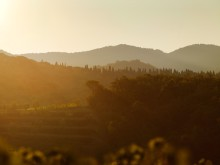 Semester i vinparadiset  – 5 tips inför ditt besök i Toscana