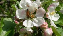 Norrköping får fler bin i innerstan