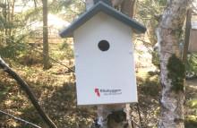 Fågelholkar flyger in på topplistan över bostadsrättsföreningarnas hållbarhetsåtgärder