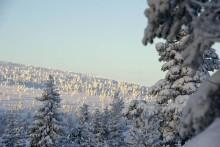Ovanligt lugnt elpris i januari