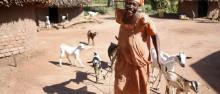 Ge bort getter, åsnor och bikupor - och bekämpa fattigdom på samma gång