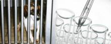 Giftfri miljö kräver paradigmskifte inom kemikalietestningen