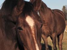 Hästnäringens önskelista över regelförenklingar