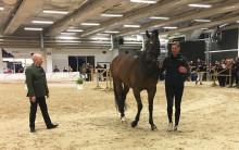 Alla hästar på Gothenburg Horse Show går igenom en veterinärkontroll innan de tillåts tävla