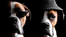 Happy Dog - Fyrverkerifritt och hundar bor kostnadsfritt på nyårsafton