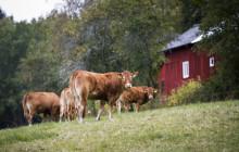 Grums kommun är en av de 10 grönaste kommunerna i Sverige