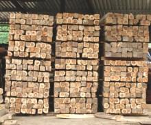 Holz als Baumaterial auch in Deutschland immer beliebter