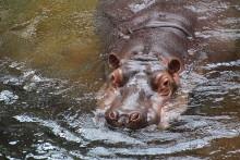 Der Zooverein auf Reisen nach Prag und Plzen - Einladung zur Ausstellungseröffnung im Altweltaffen-Haus
