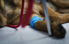 Fokus på kvalitet i djursjukvården - bra för djuren och lägre antibiotikaanvändning