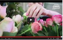 VIDEO - Skötselråd för snittrosor