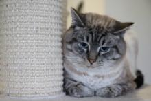 Här får hemlösa katter nya hem