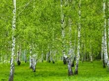 Giftfri miljö i fokus för ny forskningssatsning