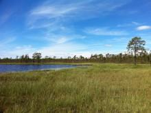 Orkidéer och annat sällsynt ska skyddas i Moras nya naturreservat