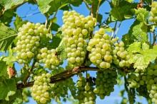 Pressinbjudan: Internationell vinkonferens i Alnarp och Köpenhamn