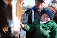 Klappa, borsta, kör, rid och galoppera – skolbarn får uppleva häst på Täby Galopp