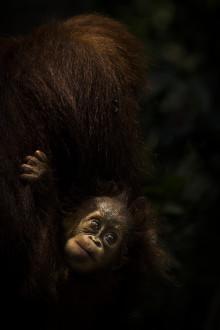 Ny utställning med bevarandefotografen Tom Svensson  – visar kampen mot det globala tjuvskyttet