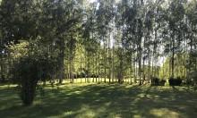 Anbud söks för att kalhugga prisad park