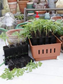 Årets trädgårdsprodukt gör oss alla till odlingsproffs