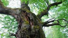 Björkön i Hjälmaren blir naturreservat