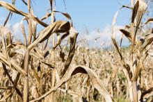 En utmaning att bedöma jordbrukets sårbarhet