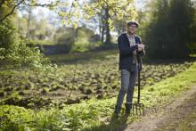 Skördetider i Oaxens grönsaksodling på Djurgården