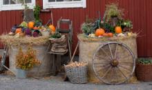 Välbesökt Skördefest på Tjolöholms Slott