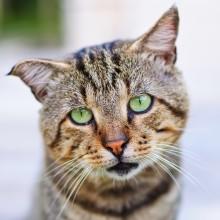 Pressemitteilung | Sommerzeit ist Urlaubszeit: Katzenschutzpass sorgt für bestmögliche Betreuung