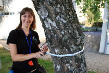 Poseidons 9 000 träd jobbar i det tysta för göteborgarna