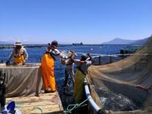 Fisketelling under gresk sol