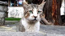 Drei Probleme, unter denen Katzen weltweit leiden – und wie der Mensch dagegen vorgehen kann
