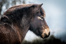 In Freiheit geboren: mit #alphaddicted zu den wilden Exmoor-Ponys im Süden Englands