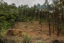 Skogar spelar avgörande roll för att tackla klimatförändringar