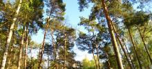 Svenska lärosäten tar helhetsgrepp om sitt klimatarbete – ska sänka egna utsläpp