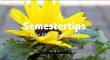 Video - Semestervattnare