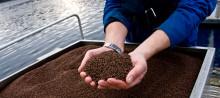 Verktøy i kampen mot lakselus finnes også innen fiskefôr
