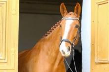 Hela Sveriges Häst har fått namnet D´Avicii