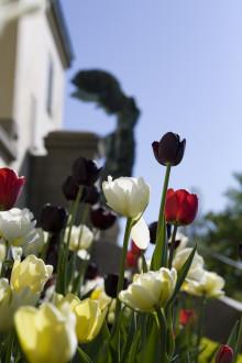 Park och trädgårdsaktiviteter våren 2015